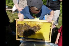Kind hält eine Bienenwabe bei einer Führung in der Imkerei