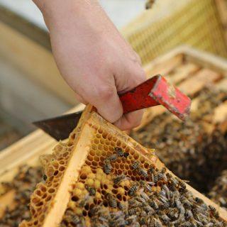 Bienen Bienenbox