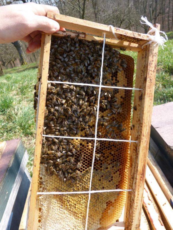 Populationsschätzung Bienenvölker