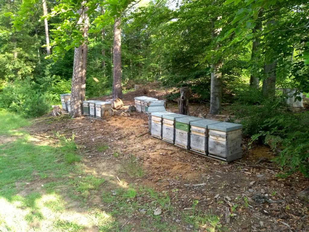 Bienenvölker Aufstellung Waldhonig