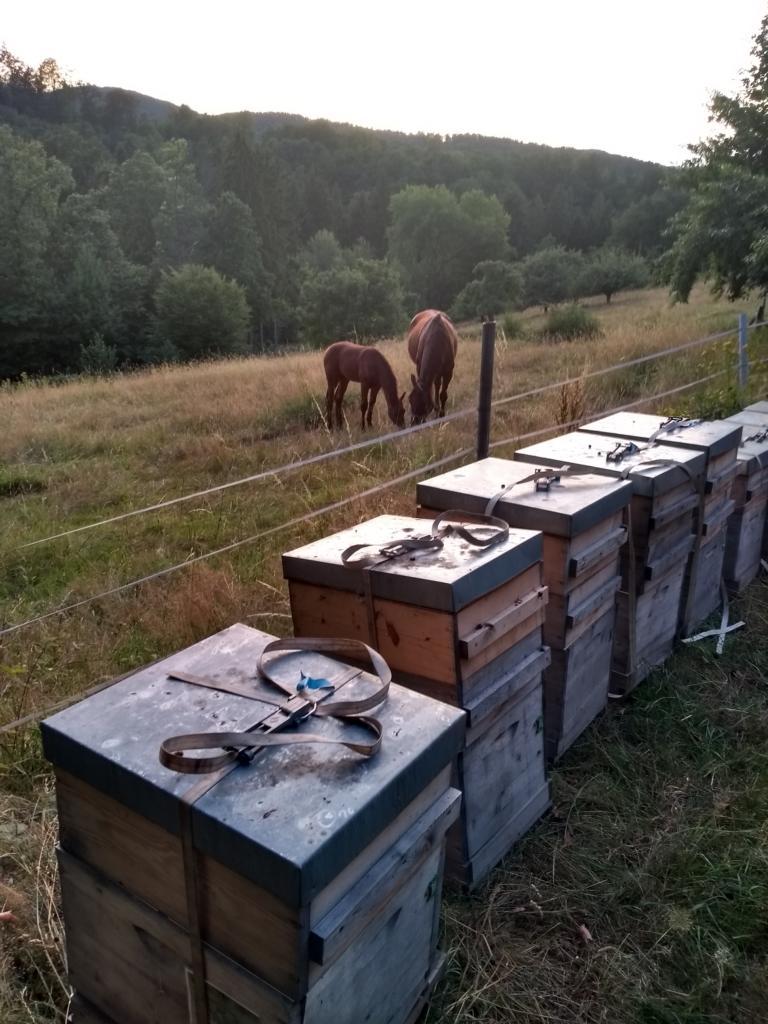 Bienenstand Edelkastanie