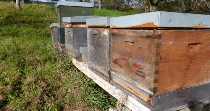 Bienenbeuten im Oktober