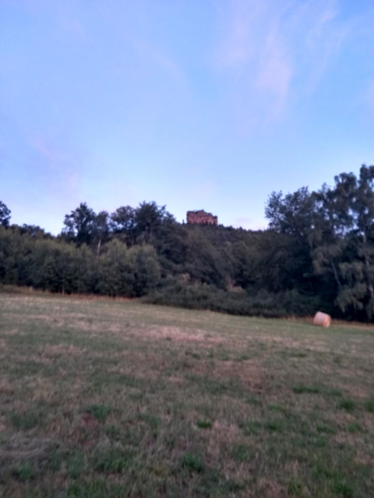 Pfälzer Wald Edelkastanie