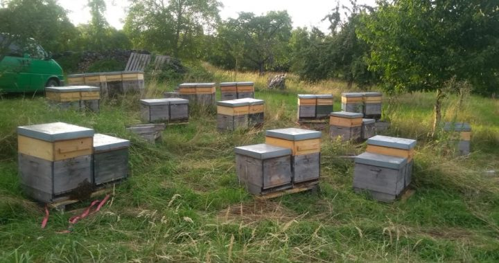 Bienenvölker kurz ver der Winterruhe
